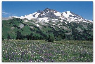 Wildflowers in Singing Pass